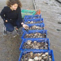 讲中文的英国本地导游Eve跟West Mersea闻名的牡蛎